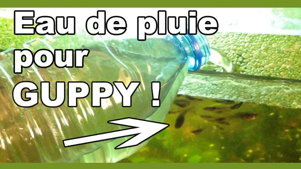 eau de pluie pour guppy aquariums aquariophilie sans filtre et respectueuse des cycles naturels. Black Bedroom Furniture Sets. Home Design Ideas