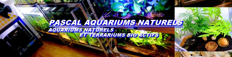 AQUARIOPHILIE RESPECTUEUSE DES CYCLES NATURELS / TERRARIUMS BIO ACTIFS / JARDINAGE / NATURE